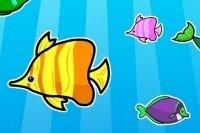Match pesci